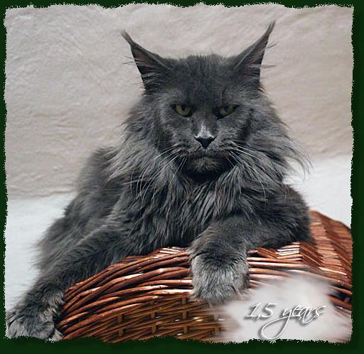 Black Male Cat Temperament